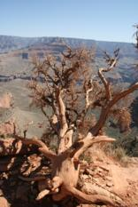 South Rim Grand Canyon (2)
