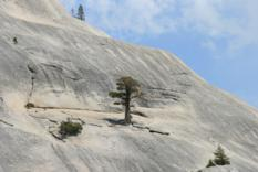 Yosemite Nationalpark (4)